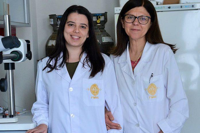 'Pâncreas bioartificial' para tratar a Diabetes, Joana Crisóstomo e Raquel Seiça