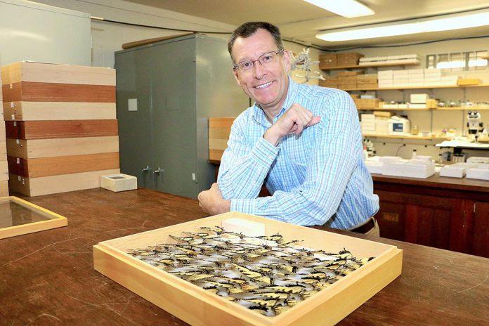 Milhões de borboletas e traças vão ser digitalizadas