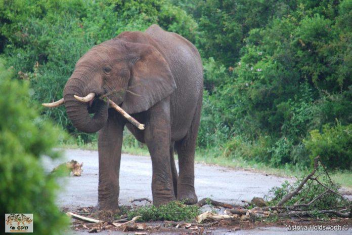 União Europeia tenta na CITES CoP17 salvar espécies em risco
