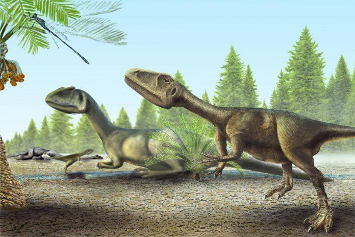 Pequeno dinossauro carnívoro descoberto perto de Torres Vedras