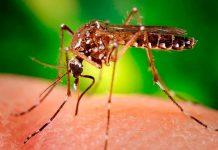 Neurologistas debatem efeitos do Zika, em Lisboa