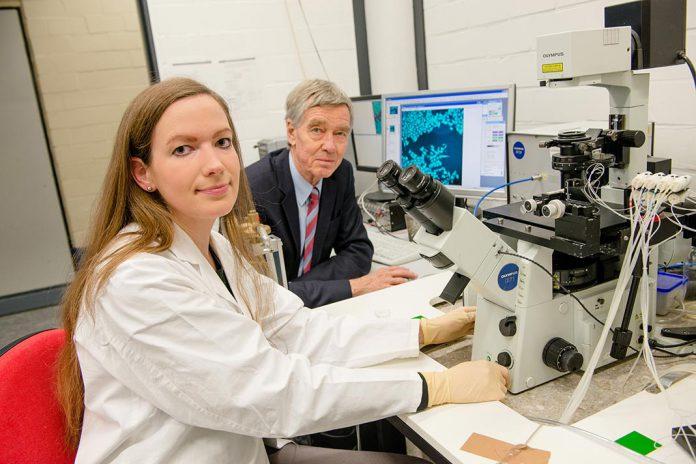 Molécula 'picante' inibe crescimento de células do cancro da mama