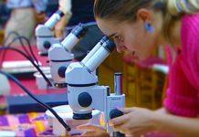 PISA 2015: Alunos portugueses melhoram em ciências, leitura e matemática