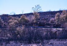 Incêndios já consumiram mais de 103 mil hectares