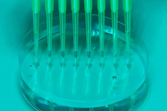 OMS: Necessário aumentar identificação de novas variantes do coronavírus