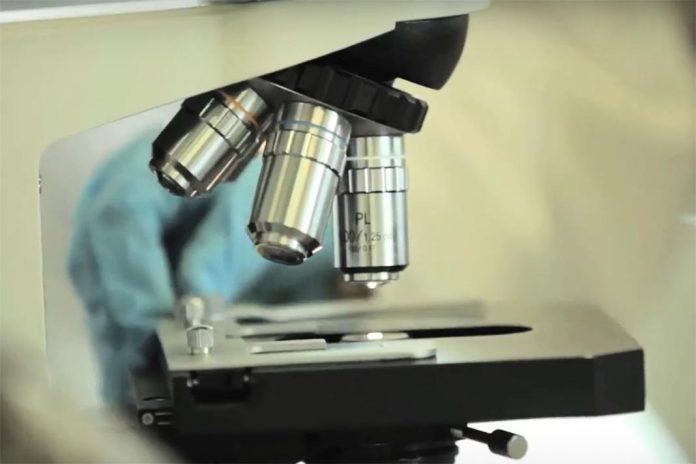 Medicamento português à base em células estaminais para tratar a COVID-19