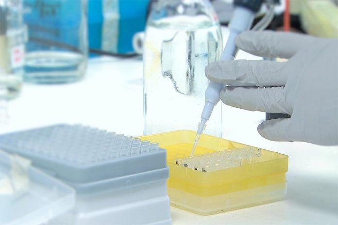 Seis cientistas portuguesas ganham bolsas do ERC