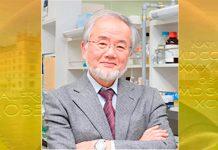 Yoshinori Ohsumi é o nobel de medicina de 2016
