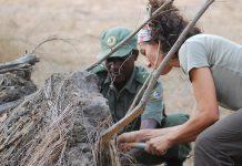 Estudo da UC contribui para conservar Parque Nacional da Gorongosa