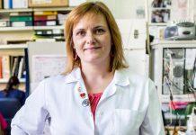 Investigadores em Coimbra avançam na doença de Alzheimer