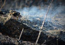 Governo apoia realização de queimadas em Vila Real, Viseu e Guarda