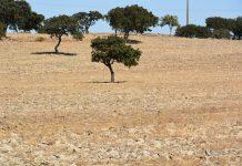 Ano de 2017 foi extremamente quente e seco em Portugal