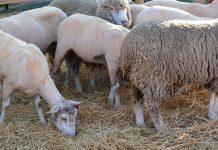 Agricultores de mais 18 municípios podem receber apoios devido à seca