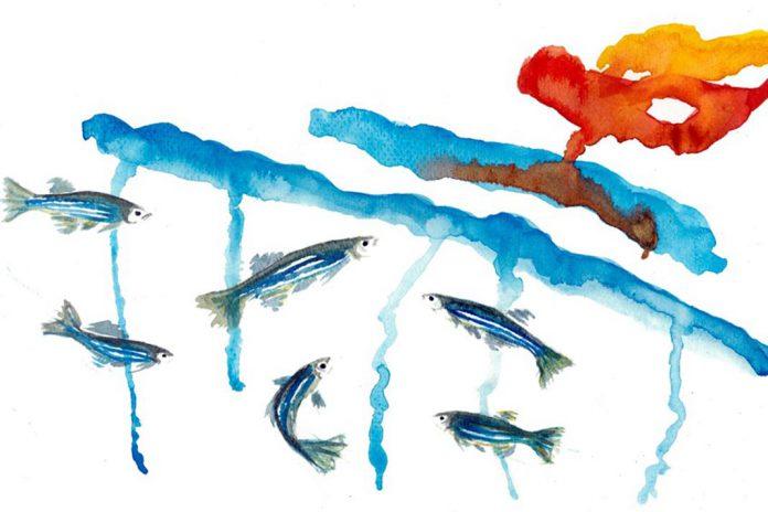Ilustração de suporte social em peixe-zebra