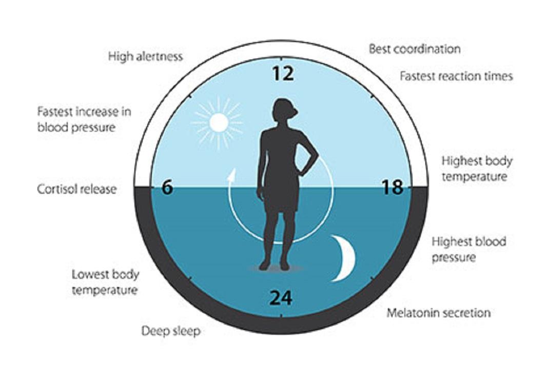 Figura 3. Figura 2B. Ilustração: © Comité Nobel da Medicina. Ilustrador: Mattias Karlén