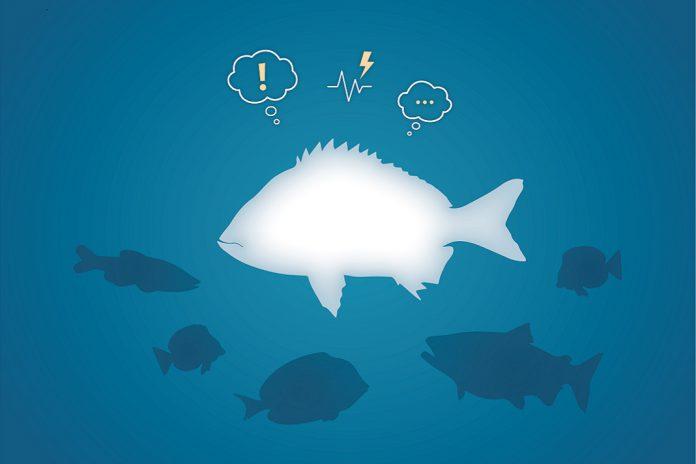 Os peixes expressam estados emocionais