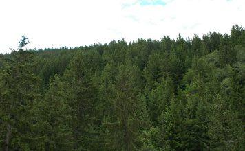 Floresta suíça