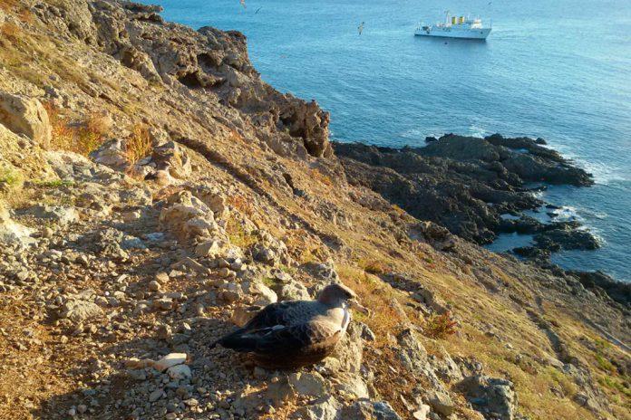 Marinha faz investigação ao largo das Ilhas Selvagens