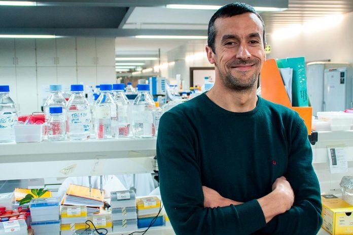Investigadores da UMinho com estratégia para regenerar lesões vertebro-medulares