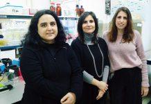 Teresa Cunha-Oliveira, Ana Cristina Rego e Luana Naia (da esquerda para a direita), investigadoras do CNC