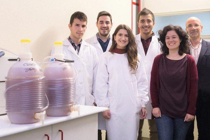 Estudantes e mentores da UA envolvidos no desenvolvimento da sidra ecoinovadora, Cidermace