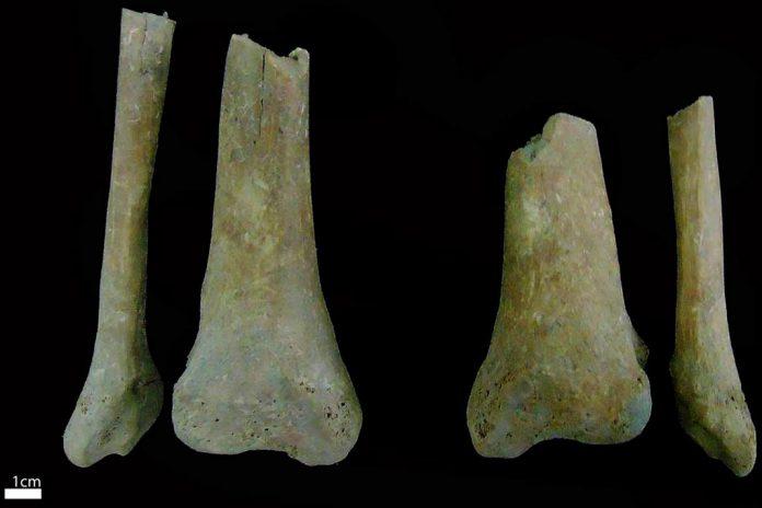 Ossadas descobertas em necrópole de Estremoz