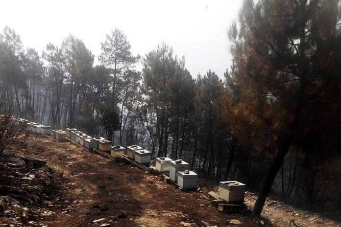 Incêndios matam milhares de colmeias