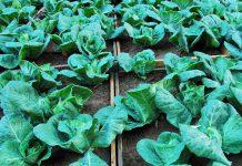 Matosinhos assinala Dia Mundial da Terra com horta comunitária