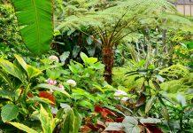 Jardins Abertos 2018 inclui jardins privados