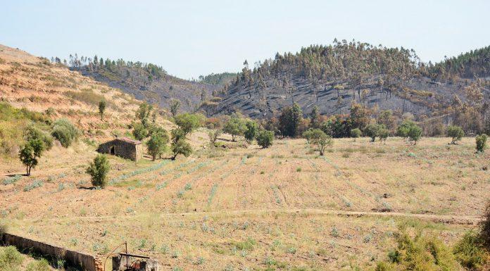 Faltam Engenheiros Florestais em Portugal