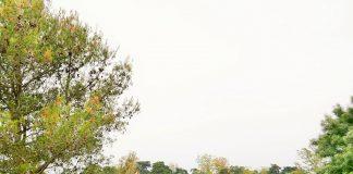 Risco de incêndio leva CML a encerrar parques recreativos do Monsanto