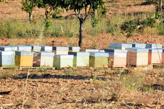 Colmeias e apicultores aumentam na União Europeia