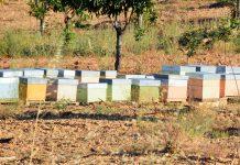 Rede de colmeias inteligentes e tecnologia Cloud para preservar abelhas melíferas