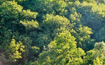 Dia da Floresta Autóctone assinalado em Penamacor na Mata Municipal