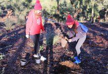 Voluntários plantam árvores autóctones na Mata Municipal de Penamacor