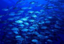 Indicadores patronizados para monitorar saúde dos oceanos