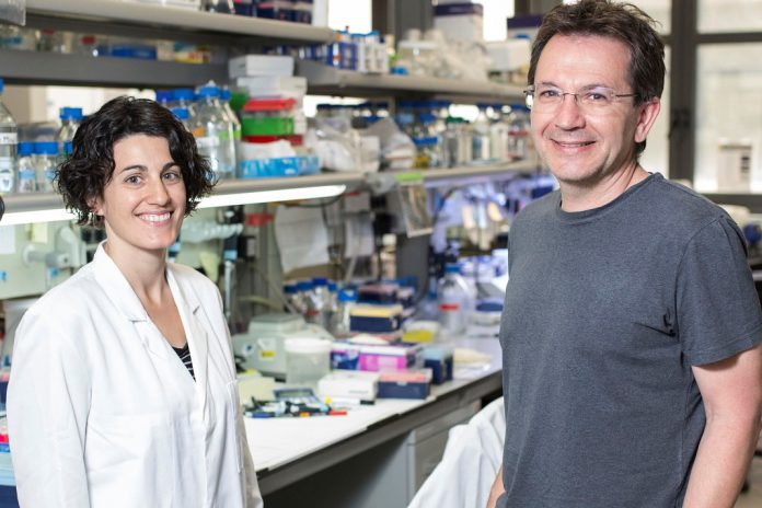 Descoberta a proteína responsável pelo desenvolvimento do autismo.