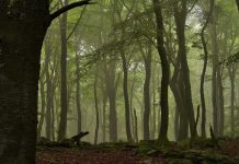 As florestas devem ser geridas para múltiplos benefícios