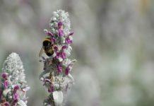 Pesticidas nocivos para as abelhas estão totalmente proibidos na União Europeia