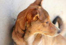 Farmacêuticas de medicamentos veterinários criam nova Associação, a APIFVET