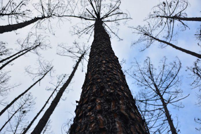 Aliança pela Floresta Autóctone em debate público