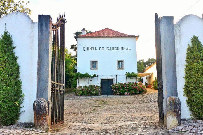 Festa na Quinta do Sanguinhal junta vinho e arte