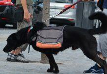 Animais de estimação beneficiam pessoas com doenças mentais