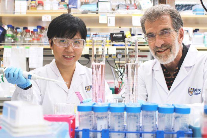 Daniel Tenen (à direita) e o Liu Bee Hui (à esquerda), investigadores do Instituto do Cancro de Singapura, da Universidade Nacional de Singapura, e membros da equipa que desenvolveu um novo medicamento peptídico que pode tratar eficazmente o cancro do fígado.