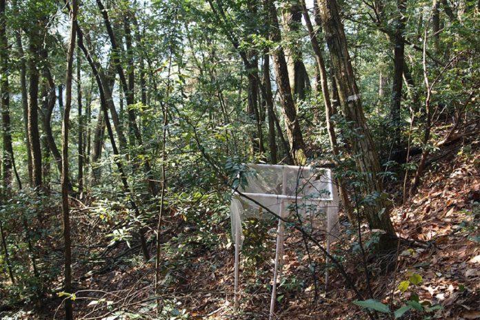 Florestas com diferentes espécies compensam melhor as alterações climáticas