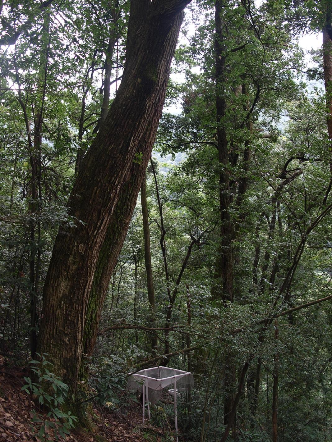 Florestas com diferentes espécies compensam as alterações climáticas