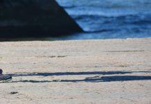 Cinco pessoas a bordo no navio Alan Kurdi podem vir para Portugal
