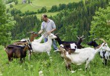Promoção de produtos agrícolas com mais financiamento europeu.