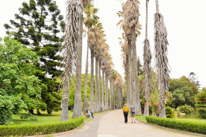 Jardim Botânico Tropical com reabilitação de 1,4 milhões de euros
