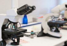 ERC atribui subvenções de Prova de Conceito a quatro investigadores portugueses